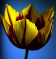 Flower...4 by RRosiEXD
