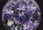 Purple by RRosiEXD
