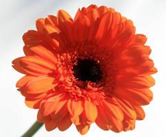 Flower...8 by RRosiEXD