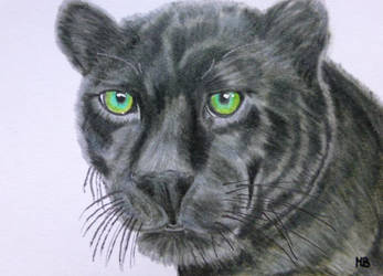 Black Panther 2 (ACEO) by Actlikenaturedoes