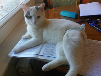 Baloo the Great Scholar pt.I-Help our foster cats by Actlikenaturedoes