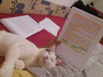 Baloo the Great Scholar pt.II-Help our foster cats by Actlikenaturedoes