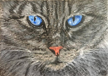 Cat portrait No.13-ACEO by Actlikenaturedoes