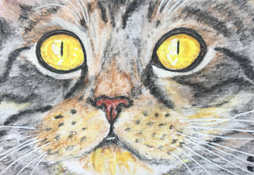 Cat portrait No.14-ACEO by Actlikenaturedoes