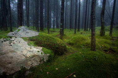 Midtfjellskogen by jonpacker