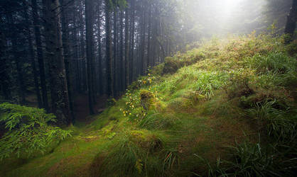 Bergenskog by jonpacker