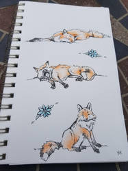 Foxes by shewolf444
