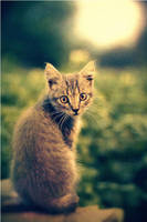 Small cat by vovkam