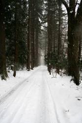 dans la neige 1 by AttempteStock