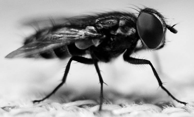 fly by AttempteStock