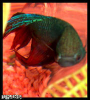 Prometheus Fishface by neurolepsia