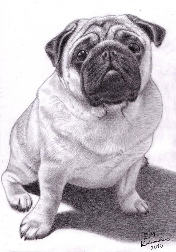 Brucey the Pug by Elkenar