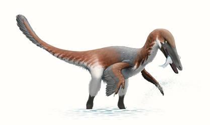 Austroraptor for Wikipedia by FredtheDinosaurman