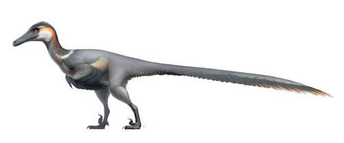 Austroraptor cabazai for Wikipedia by FredtheDinosaurman