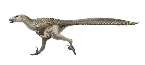 Dromaeosaurus albertensis for Wikipedia by FredtheDinosaurman
