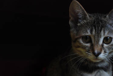 Hi kitty by 0aki0