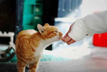Hi Mr.cat by 0aki0