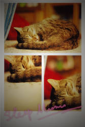 Goodnight kitty by 0aki0
