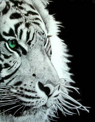 Tyger by bluewhale13