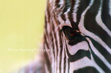 Equus Quagga by bluewhale13