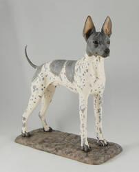 American Hairless Terrier by Kesa-Godzen