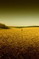 Cornfield by j-adree