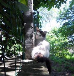 Kitten by ami-d-v