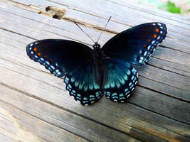 Butterfly by Holly-James