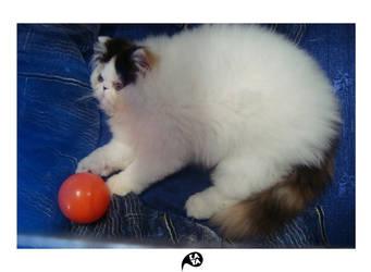 beautiful cats 1 by kaya01