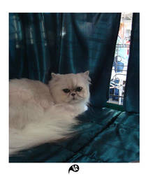 beautiful cats 2 by kaya01