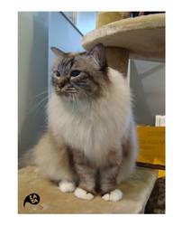 beautiful cats 5 by kaya01