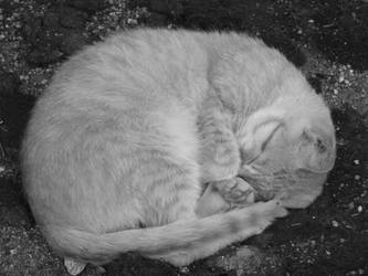 Sleeping cat by Betwithell
