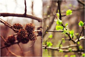 Fall into spring. by NevhariaDGB