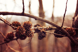 Autumn's still here. by NevhariaDGB