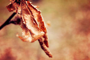 Leaf's last ballet. by NevhariaDGB
