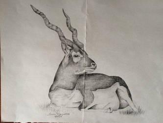 Gazelle by KeroRocks