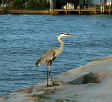 Rockport, TX - Crane 2 by policegirl01