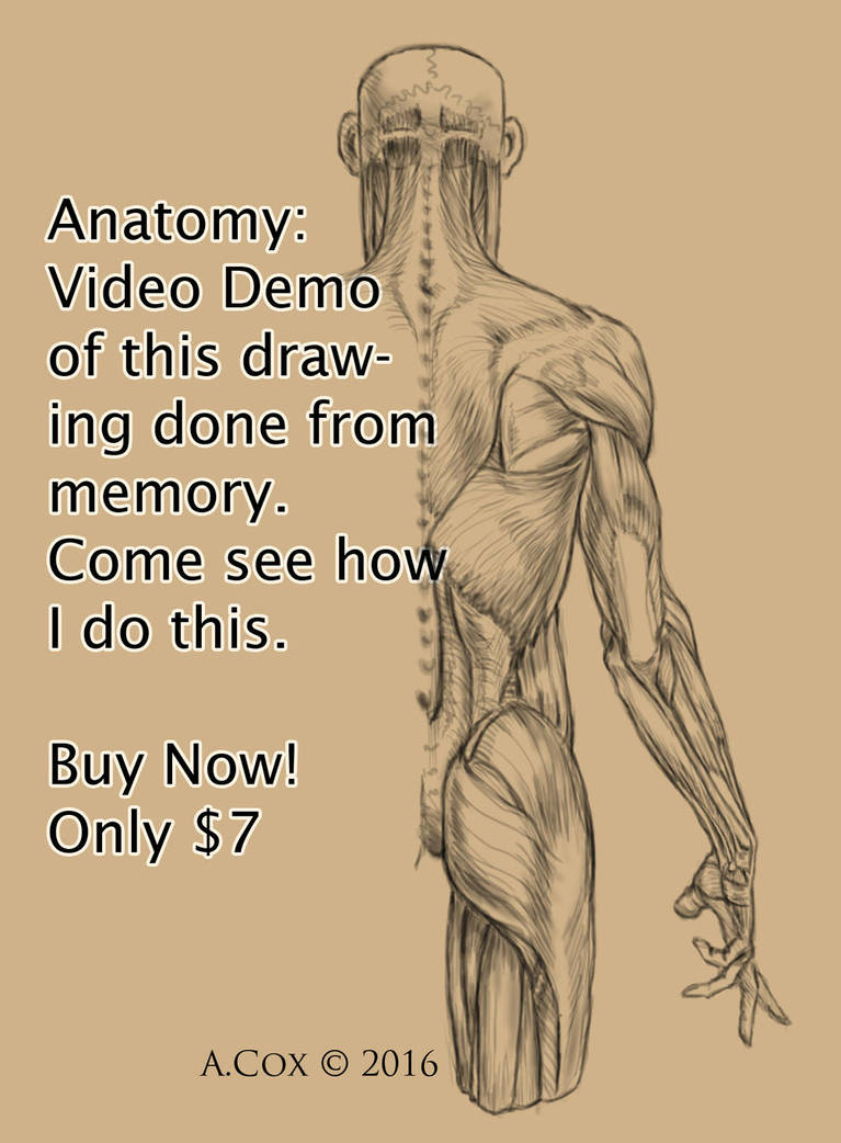 Anatomy Demo Videos For Sale By Andrewcox On Deviantart