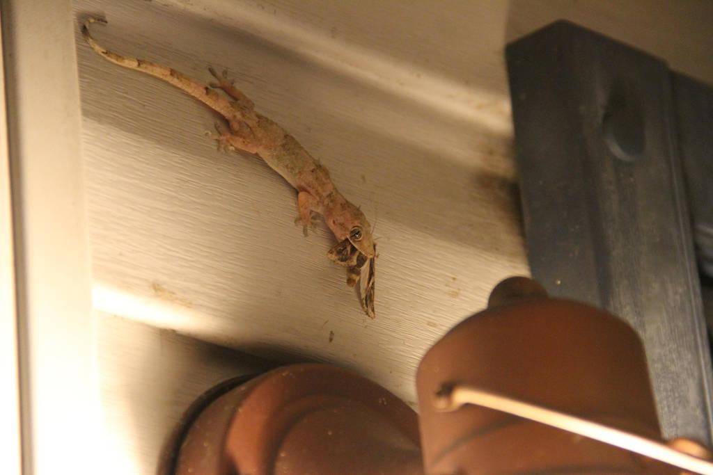 Gecko Chow by NickBentonArt