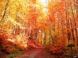 Last Days of Autumn by sDodovieh