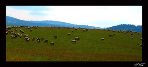 Sheep by Trinzy