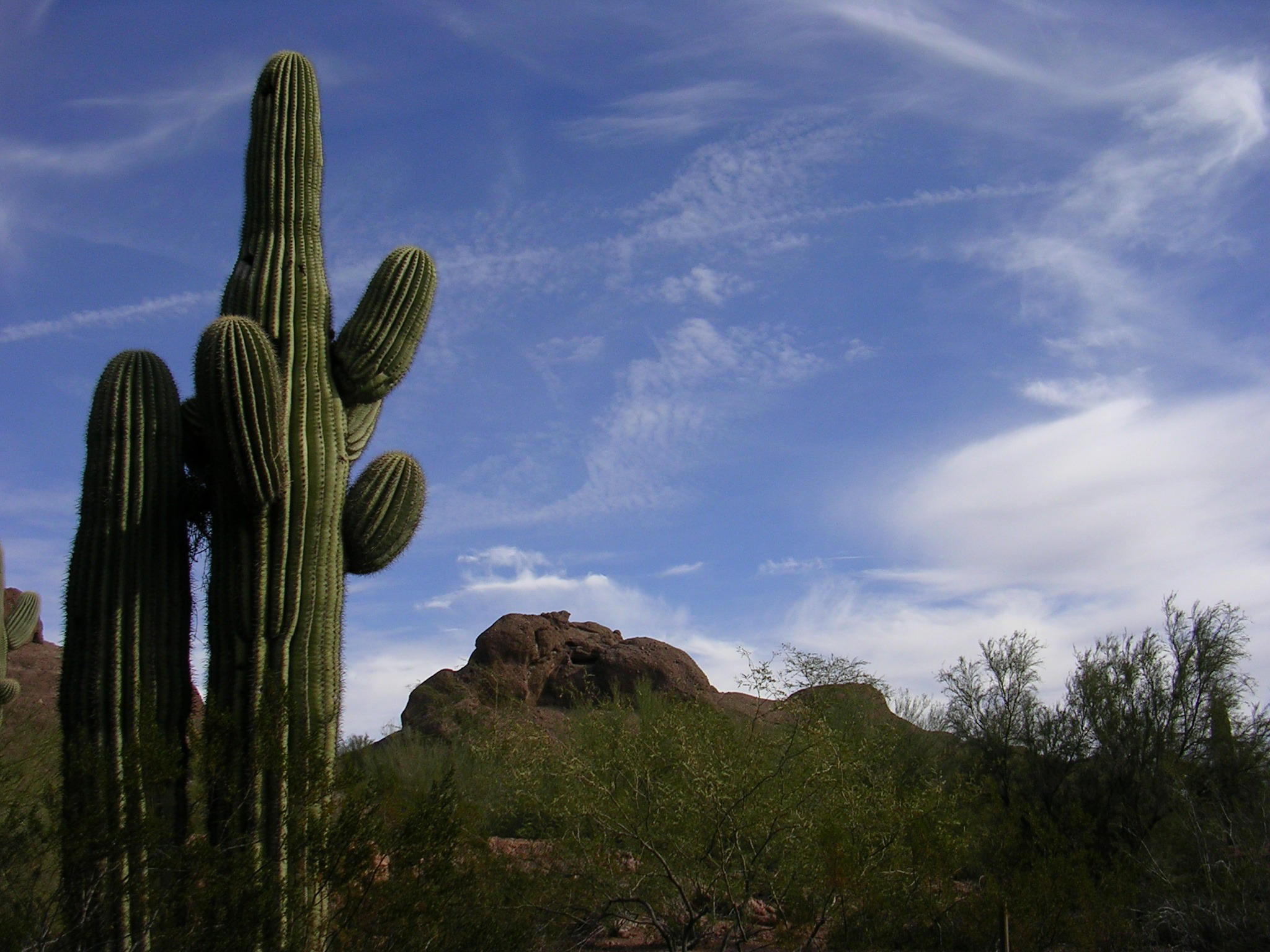 Saguaro and rockscape by scottVee