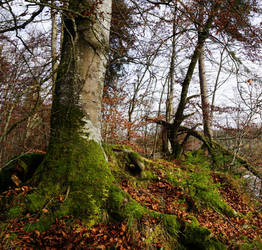 Mossy roots by primulom