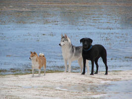 Beach Dogs by orcafreedom1