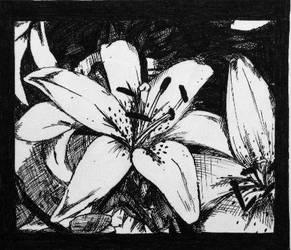 lily. by xxburiedxliexx