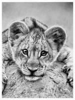 little lion by francoclun