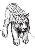 Tiger by Kringelkatze