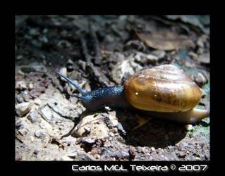 Snail on trail by Starkhyel