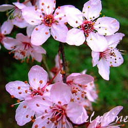 _ d'un rose eclatant by Para-Chut