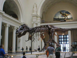 Sue The Tyrannosaurus by Carnosaur